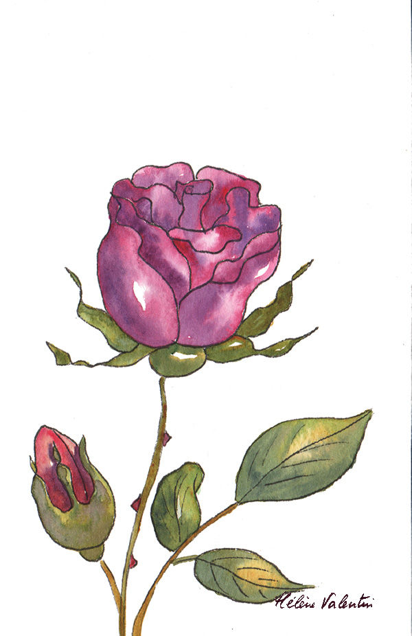 rose couleur